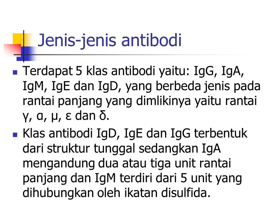 Jenis-jenis antibodi Terdapat 5 klas antibodi yaitu: IgG, IgA, IgM, IgE dan IgD, yang berbeda jenis pada rantai panjang yang dimlikinya yaitu rantai γ