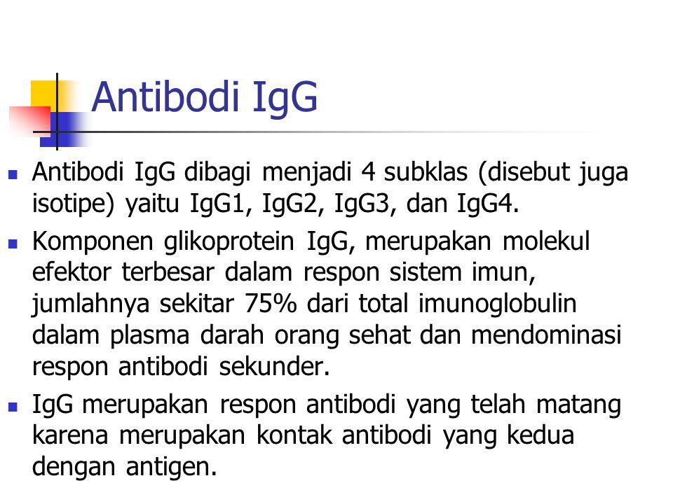 Antibodi IgG Antibodi IgG dibagi menjadi 4 subklas (disebut juga isotipe) yaitu IgG1, IgG2, IgG3, dan IgG4. Komponen glikoprotein IgG, merupakan molek
