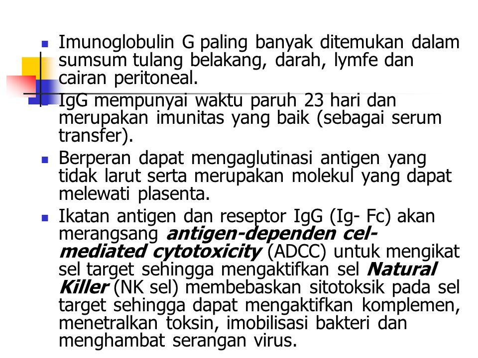 Imunoglobulin G paling banyak ditemukan dalam sumsum tulang belakang, darah, lymfe dan cairan peritoneal. IgG mempunyai waktu paruh 23 hari dan merupa