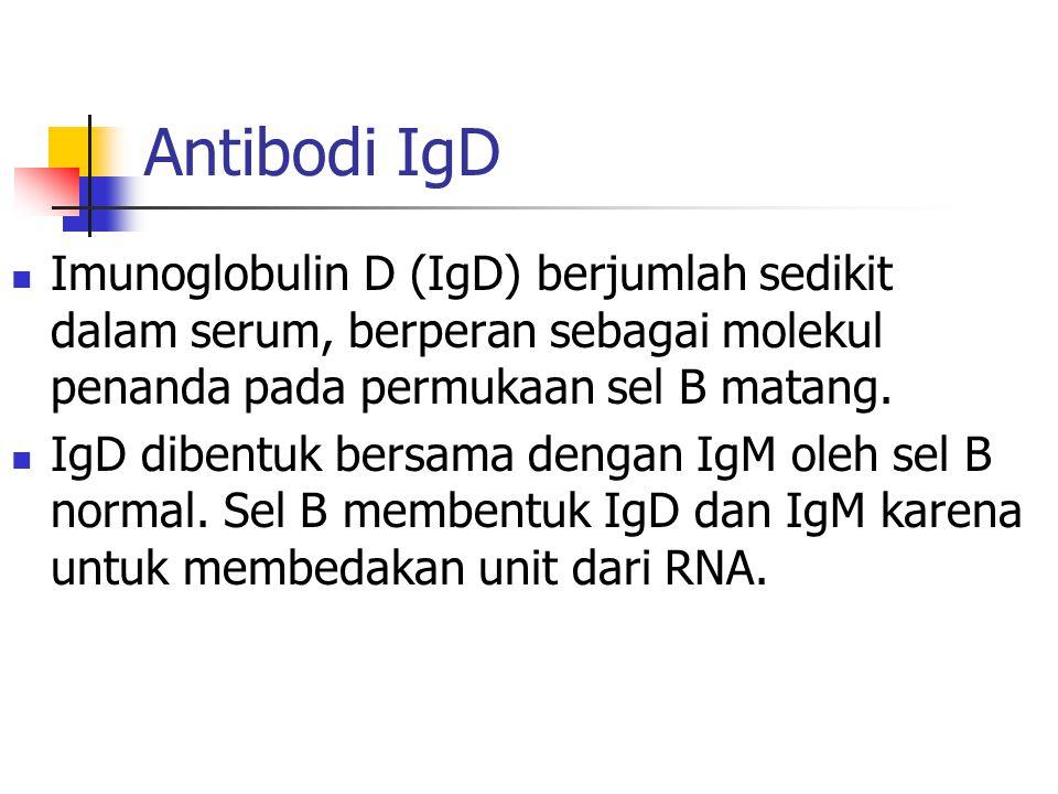 Antibodi IgD Imunoglobulin D (IgD) berjumlah sedikit dalam serum, berperan sebagai molekul penanda pada permukaan sel B matang. IgD dibentuk bersama d