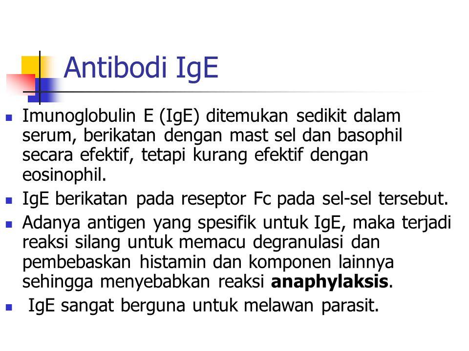 Antibodi IgE Imunoglobulin E (IgE) ditemukan sedikit dalam serum, berikatan dengan mast sel dan basophil secara efektif, tetapi kurang efektif dengan