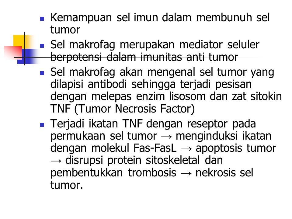 Kemampuan sel imun dalam membunuh sel tumor Sel makrofag merupakan mediator seluler berpotensi dalam imunitas anti tumor Sel makrofag akan mengenal se
