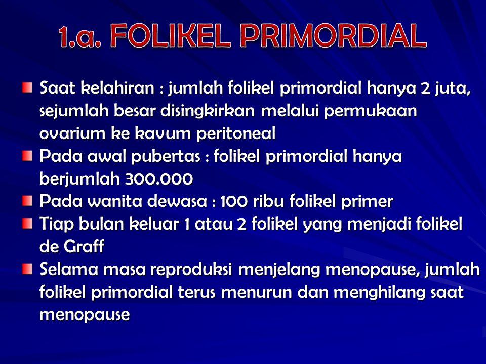Saat kelahiran : jumlah folikel primordial hanya 2 juta, sejumlah besar disingkirkan melalui permukaan ovarium ke kavum peritoneal Pada awal pubertas