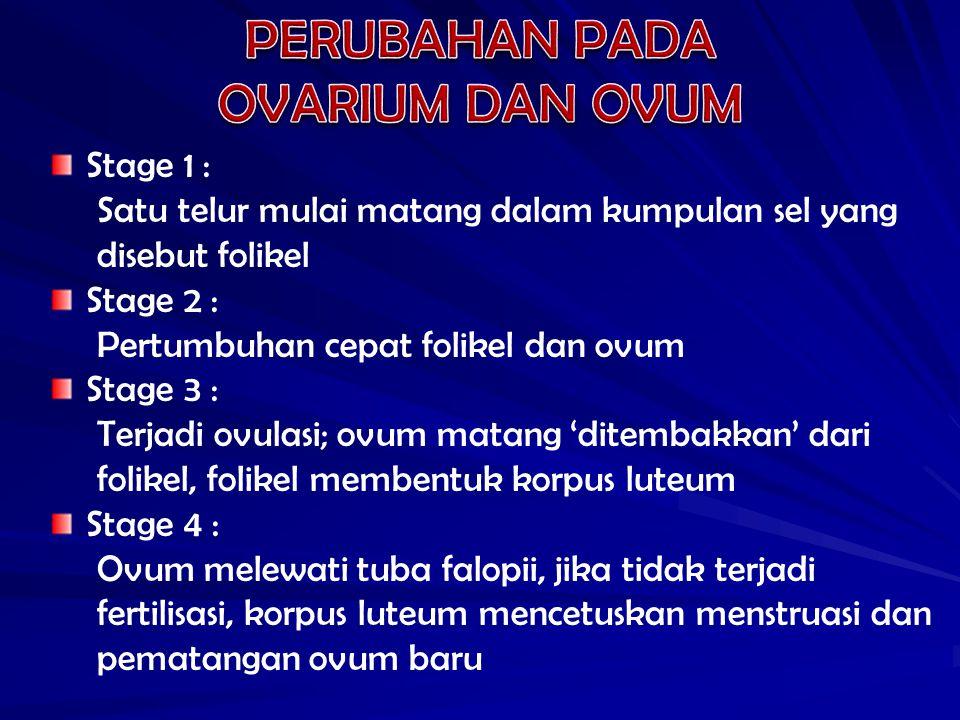Stage 1 : Satu telur mulai matang dalam kumpulan sel yang disebut folikel Stage 2 : Pertumbuhan cepat folikel dan ovum Stage 3 : Terjadi ovulasi; ovum