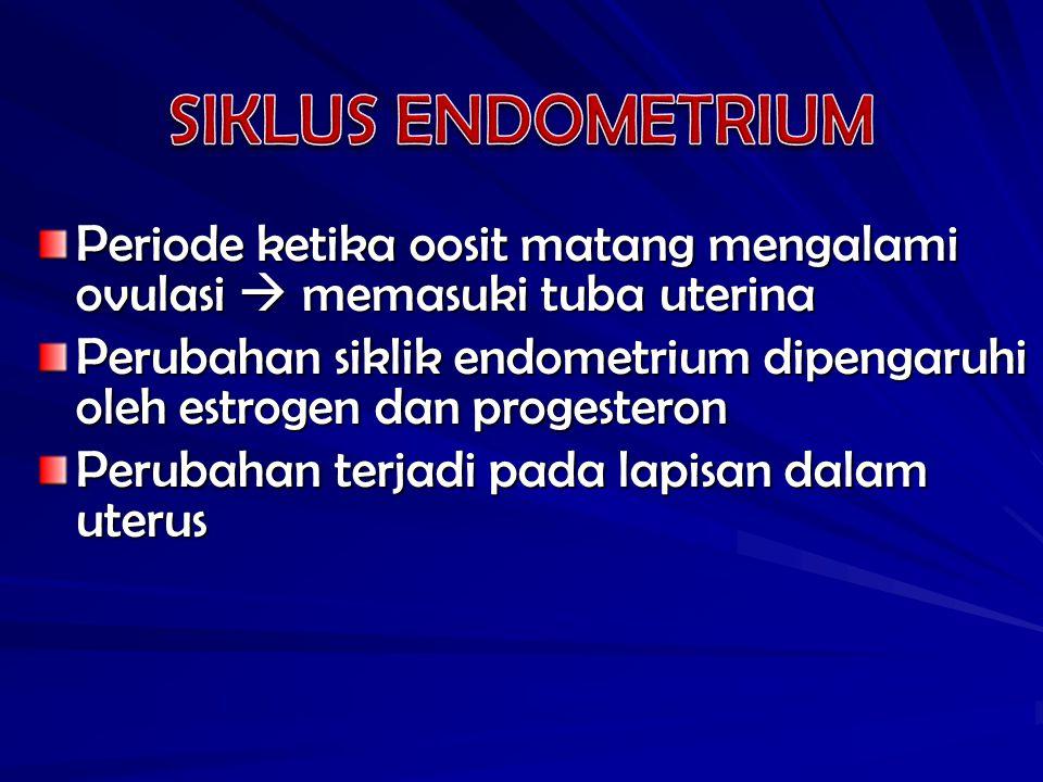 Periode ketika oosit matang mengalami ovulasi  memasuki tuba uterina Perubahan siklik endometrium dipengaruhi oleh estrogen dan progesteron Perubahan