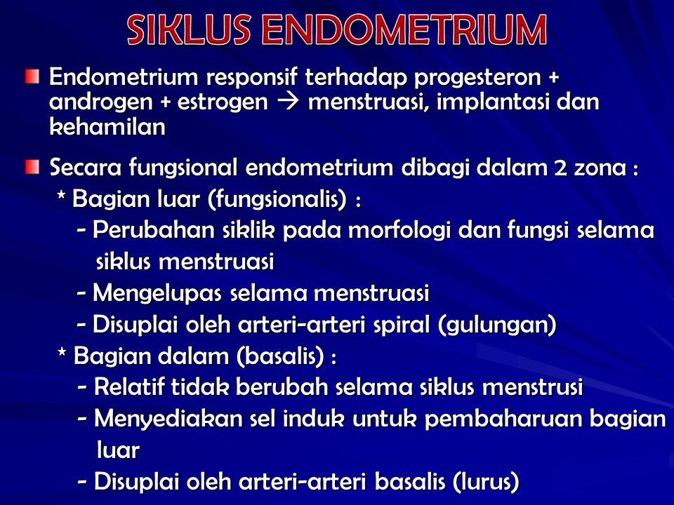 Endometrium responsif terhadap progesteron + androgen + estrogen  menstruasi, implantasi dan kehamilan Secara fungsional endometrium dibagi dalam 2 zona : * Bagian luar (fungsionalis) : * Bagian luar (fungsionalis) : - Perubahan siklik pada morfologi dan fungsi selama - Perubahan siklik pada morfologi dan fungsi selama siklus menstruasi siklus menstruasi - Mengelupas selama menstruasi - Mengelupas selama menstruasi - Disuplai oleh arteri-arteri spiral (gulungan) - Disuplai oleh arteri-arteri spiral (gulungan) * Bagian dalam (basalis) : - Relatif tidak berubah selama siklus menstrusi - Relatif tidak berubah selama siklus menstrusi - Menyediakan sel induk untuk pembaharuan bagian - Menyediakan sel induk untuk pembaharuan bagian luar luar - Disuplai oleh arteri-arteri basalis (lurus) - Disuplai oleh arteri-arteri basalis (lurus)