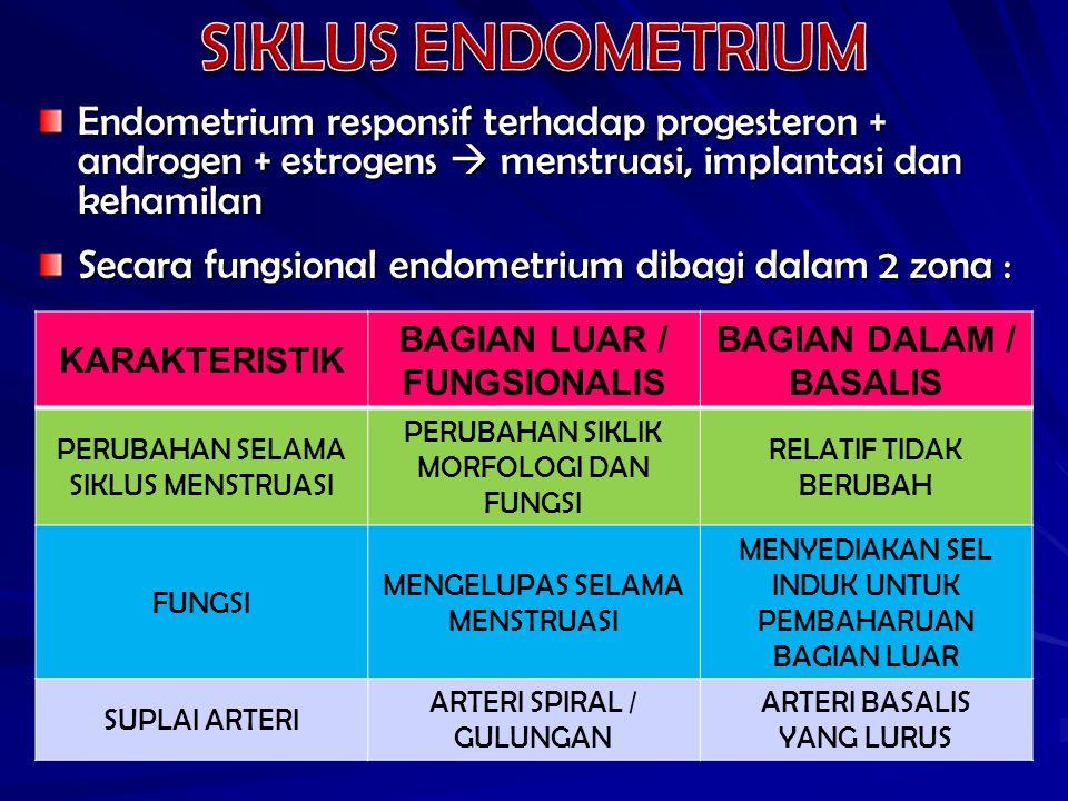 Endometrium responsif terhadap progesteron + androgen + estrogens  menstruasi, implantasi dan kehamilan Secara fungsional endometrium dibagi dalam 2