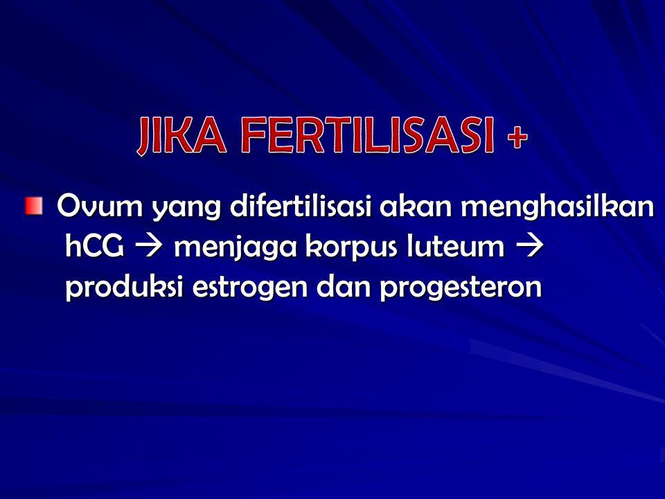 Ovum yang difertilisasi akan menghasilkan Ovum yang difertilisasi akan menghasilkan hCG  menjaga korpus luteum  hCG  menjaga korpus luteum  produksi estrogen dan progesteron produksi estrogen dan progesteron