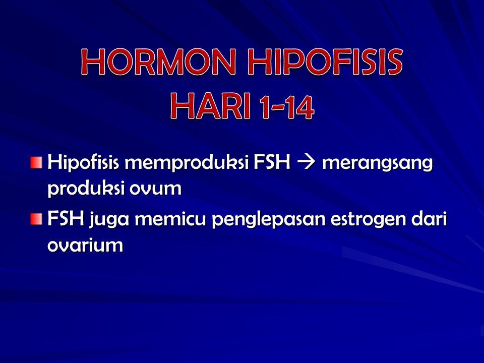 Hipofisis memproduksi FSH  merangsang produksi ovum FSH juga memicu penglepasan estrogen dari ovarium