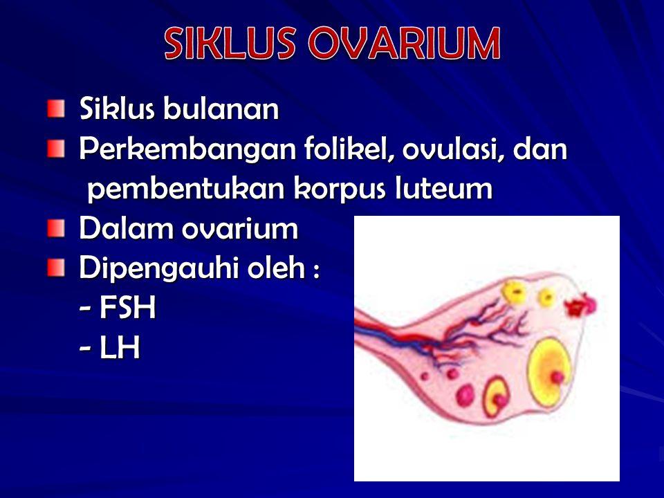 Saat ovulasi : - folikel matang yang mendekati permukaan ovarium - folikel matang yang mendekati permukaan ovarium pecah pecah - ovum dilepaskan bersama sel-sel granulosa yang - ovum dilepaskan bersama sel-sel granulosa yang melekat pada ovum (korona radiata) melekat pada ovum (korona radiata) Sesudah ovulasi : Sesudah ovulasi : - - sel-sel stratum granulosum berproliferasi + jaringan ikat dan pembuluh darah kecil di situ  masuk ke ruangan bekas ovum dan antrum - biasanya ada perdarahan sedikit  korpus rubrum, yang berumur pendek