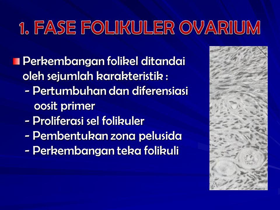 Perkembangan folikel ditandai oleh sejumlah karakteristik : - Pertumbuhan dan diferensiasi - Pertumbuhan dan diferensiasi oosit primer oosit primer -