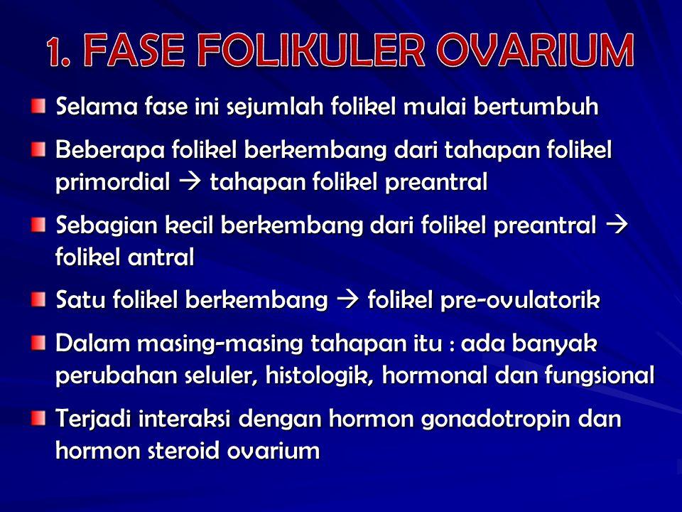 Selama fase ini sejumlah folikel mulai bertumbuh Beberapa folikel berkembang dari tahapan folikel primordial  tahapan folikel preantral Sebagian kecil berkembang dari folikel preantral  folikel antral Satu folikel berkembang  folikel pre-ovulatorik Dalam masing-masing tahapan itu : ada banyak perubahan seluler, histologik, hormonal dan fungsional Terjadi interaksi dengan hormon gonadotropin dan hormon steroid ovarium