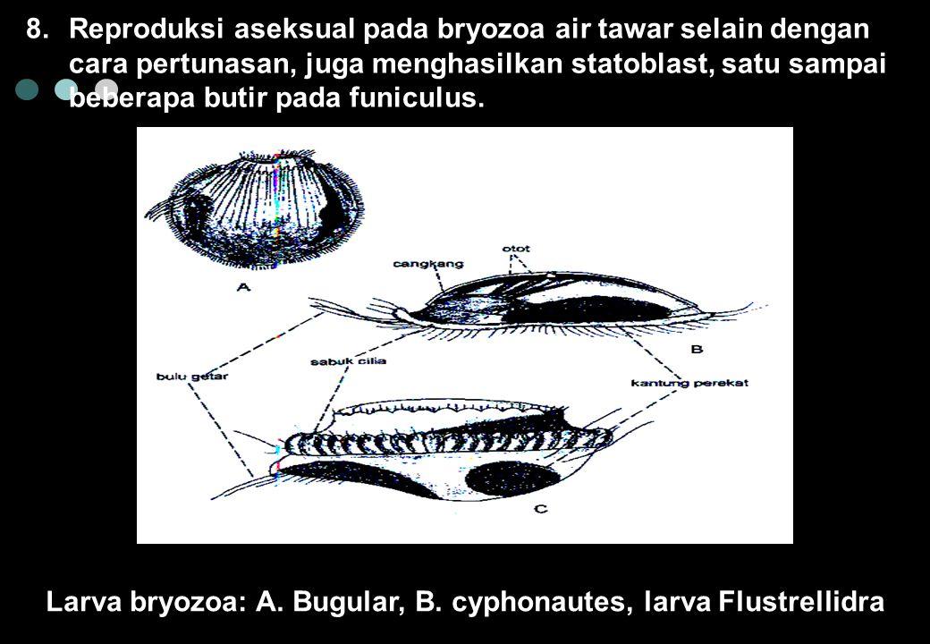 8.Reproduksi aseksual pada bryozoa air tawar selain dengan cara pertunasan, juga menghasilkan statoblast, satu sampai beberapa butir pada funiculus.