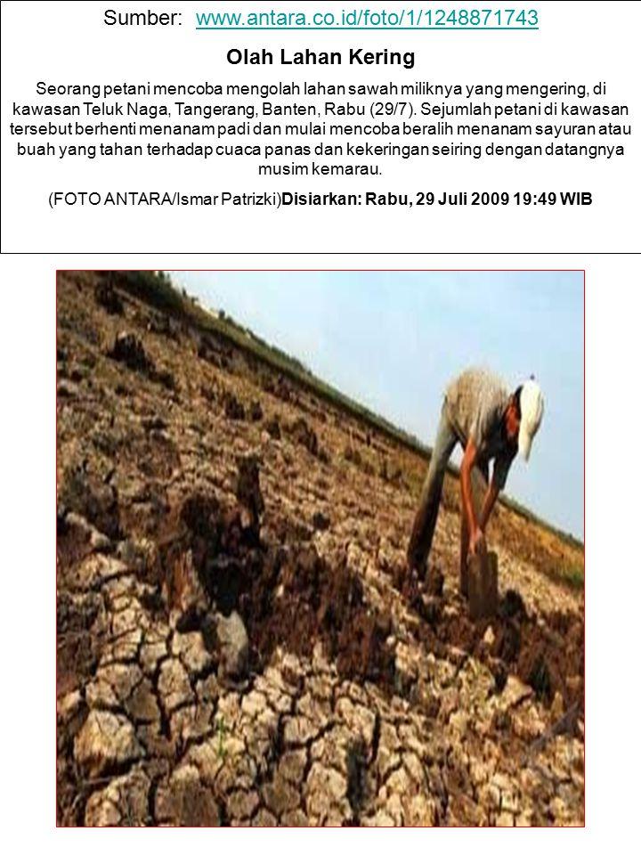 Sumber: www.antara.co.id/foto/1/1248871743www.antara.co.id/foto/1/1248871743 Olah Lahan Kering Seorang petani mencoba mengolah lahan sawah miliknya ya