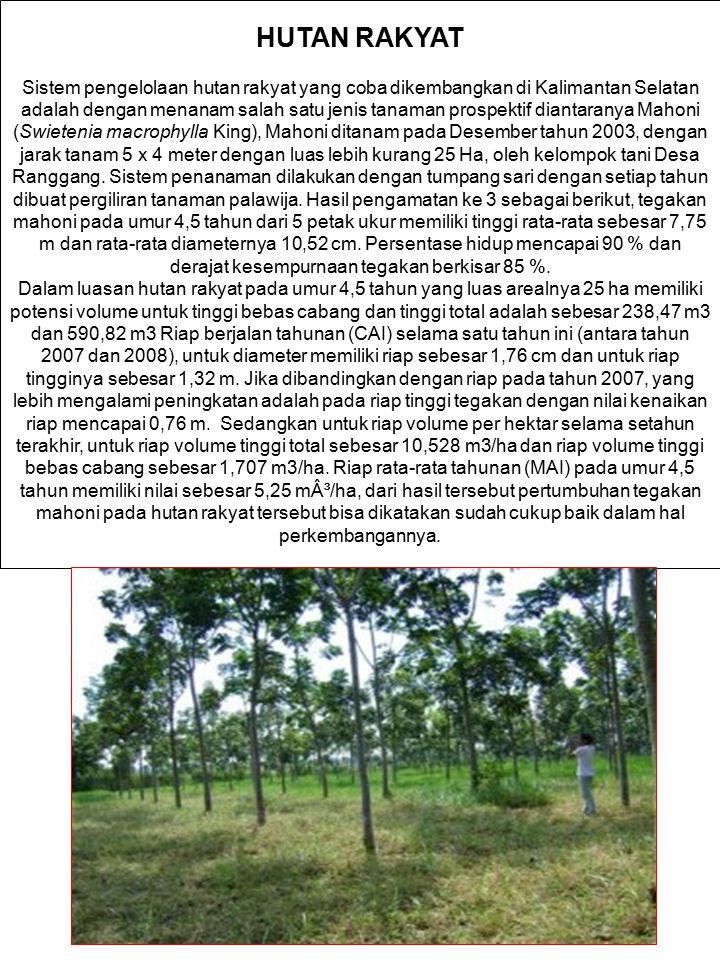 HUTAN RAKYAT Sistem pengelolaan hutan rakyat yang coba dikembangkan di Kalimantan Selatan adalah dengan menanam salah satu jenis tanaman prospektif di