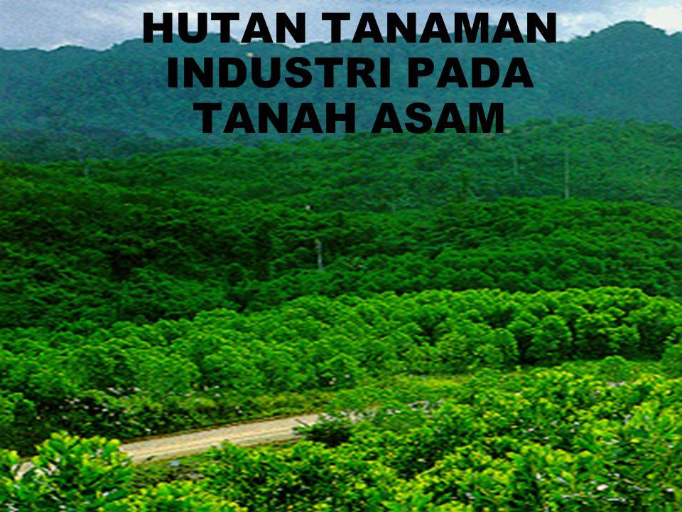 HUTAN TANAMAN INDUSTRI PADA TANAH ASAM