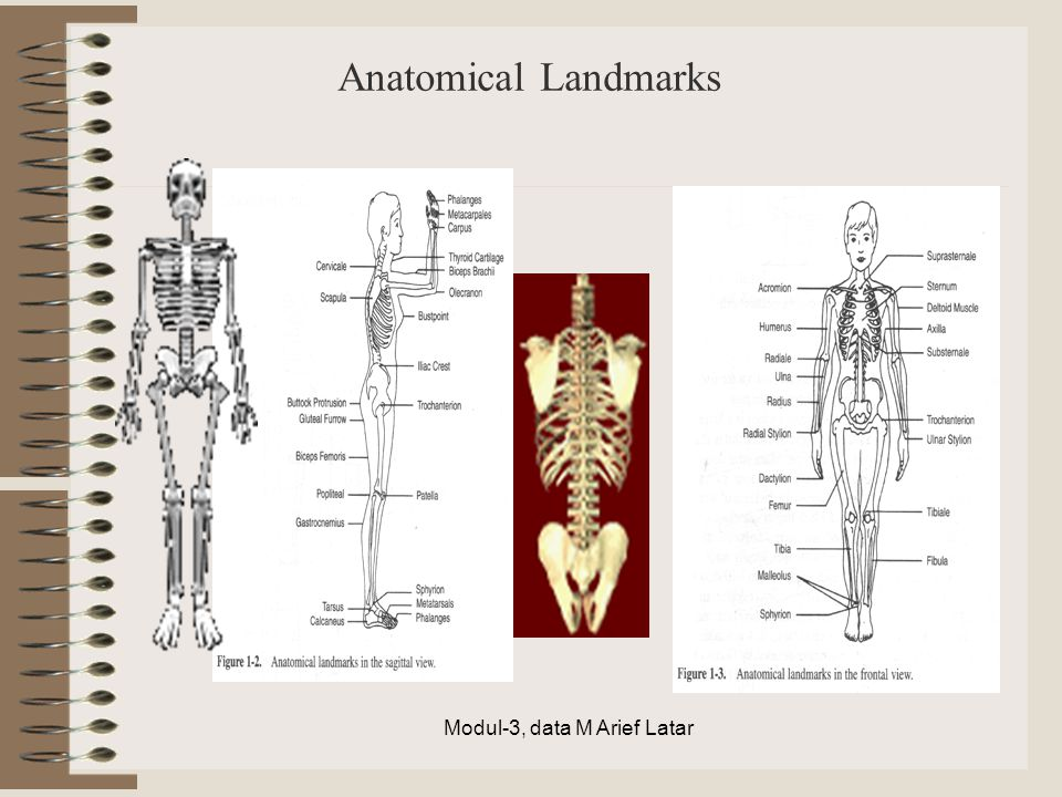 Anatomical Landmarks Modul-3, data M Arief Latar