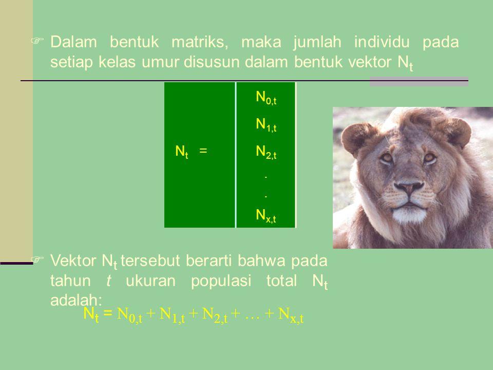  Dalam bentuk matriks, maka jumlah individu pada setiap kelas umur disusun dalam bentuk vektor N t N 0,t N 1,t NtNt =N 2,t.... N x,t  Vektor N t ter