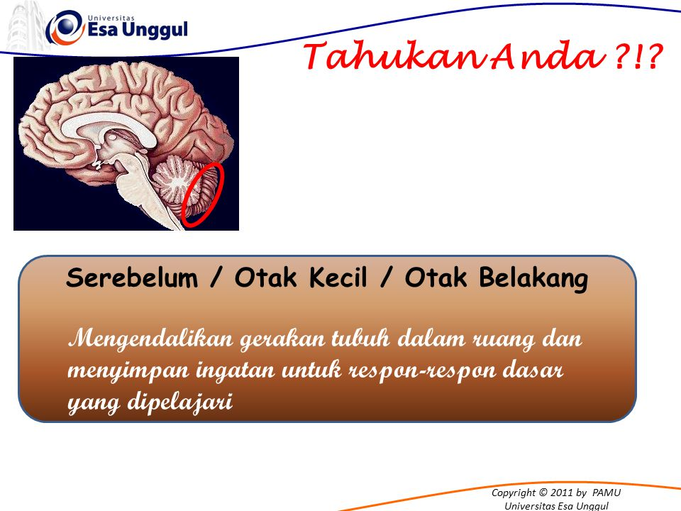 Copyright © 2011 by PAMU Universitas Esa Unggul Tahukan Anda !.