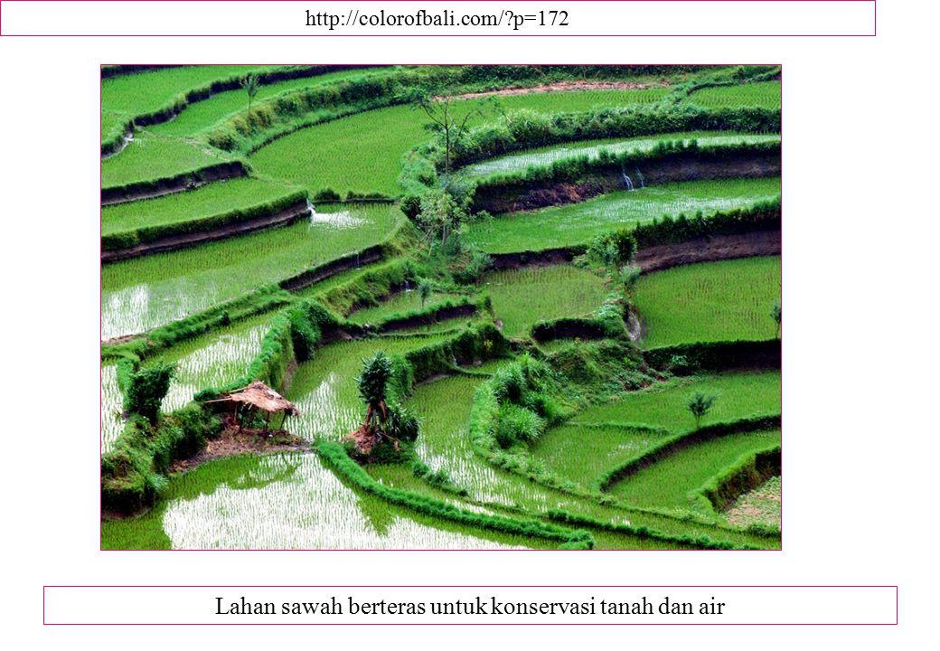 http://colorofbali.com/?p=172 Lahan sawah berteras untuk konservasi tanah dan air