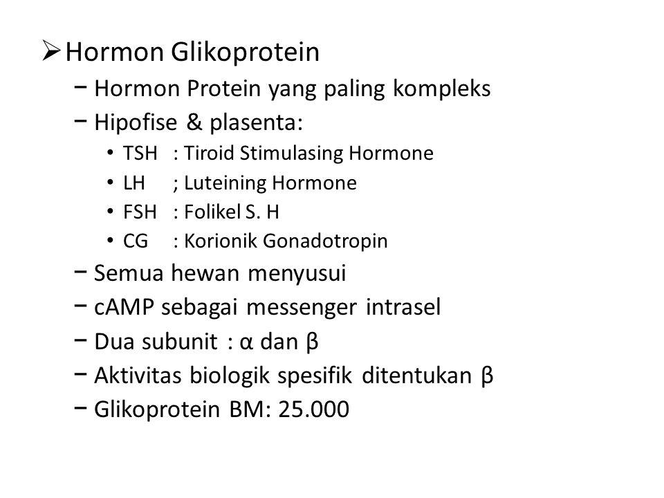  Hormon Glikoprotein − Hormon Protein yang paling kompleks − Hipofise & plasenta: TSH: Tiroid Stimulasing Hormone LH; Luteining Hormone FSH: Folikel S.