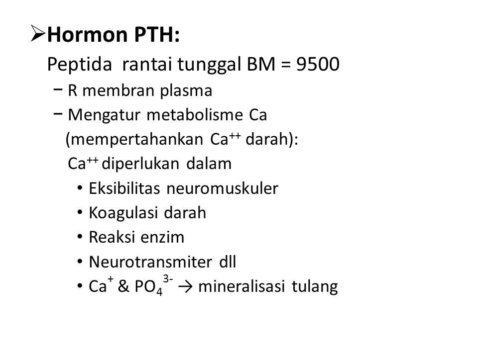  Hormon PTH: Peptida rantai tunggal BM = 9500 − R membran plasma − Mengatur metabolisme Ca (mempertahankan Ca ++ darah): Ca ++ diperlukan dalam Eksibilitas neuromuskuler Koagulasi darah Reaksi enzim Neurotransmiter dll Ca + & PO 4 3- → mineralisasi tulang