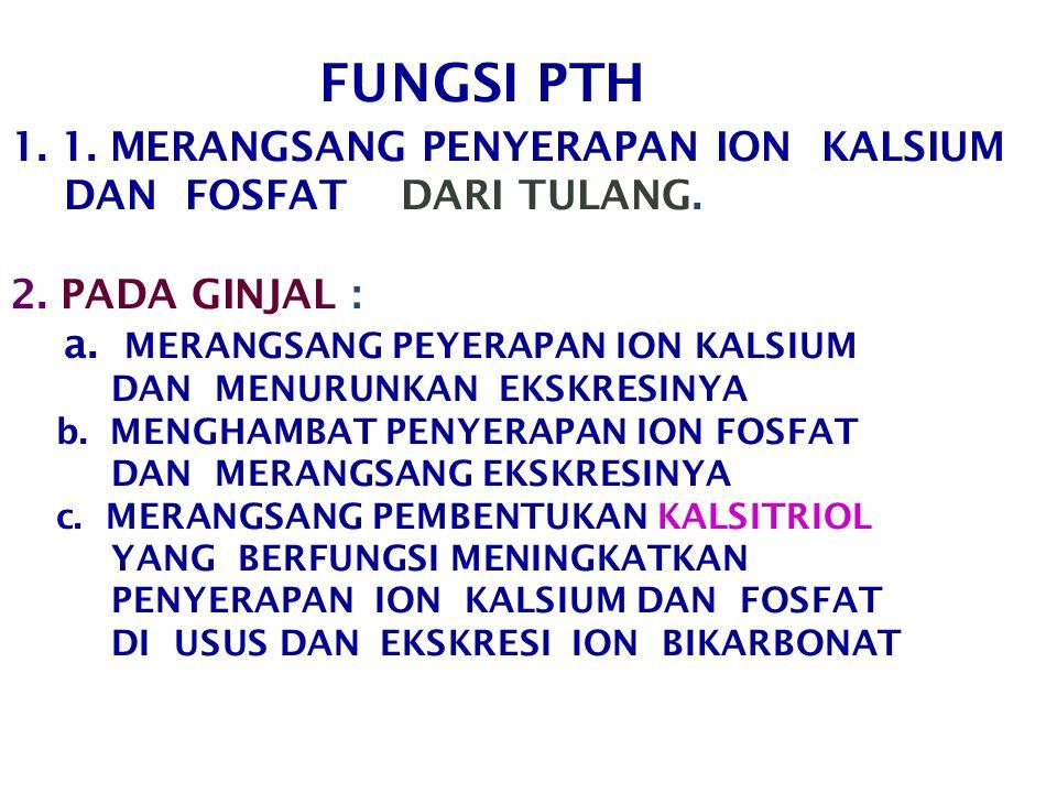 FUNGSI PTH 1.1. MERANGSANG PENYERAPAN ION KALSIUM DAN FOSFAT DARI TULANG.