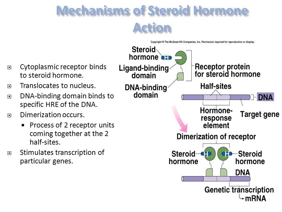  Cytoplasmic receptor binds to steroid hormone.  Translocates to nucleus.  DNA-binding domain binds to specific HRE of the DNA.  Dimerization occu
