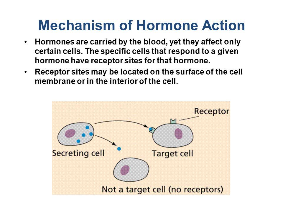 SISTEM HORMON Hormon = membangkitkan aktivitas Hormon oleh jar.