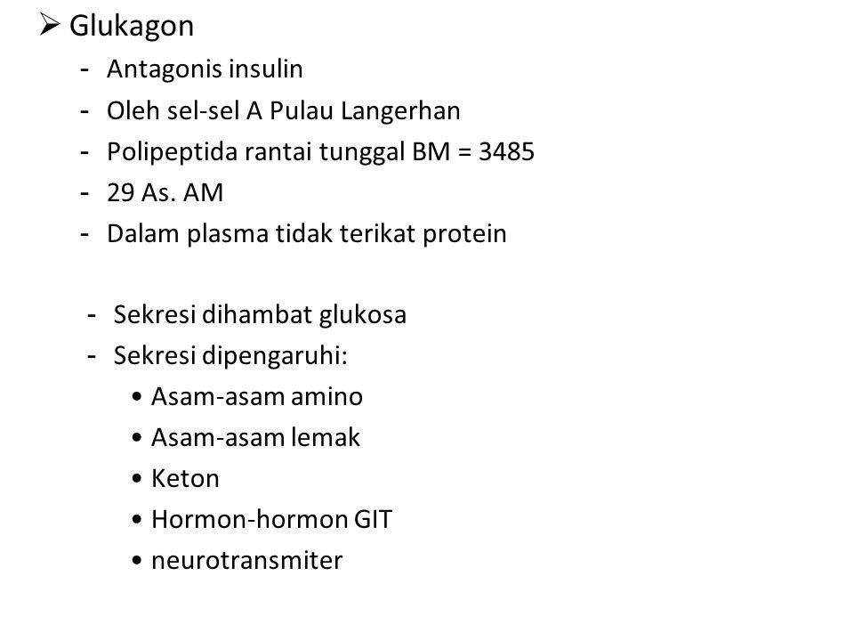  Glukagon - Antagonis insulin - Oleh sel-sel A Pulau Langerhan - Polipeptida rantai tunggal BM = 3485 - 29 As.
