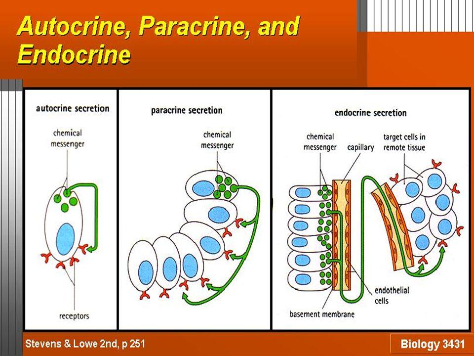 Mengatur : Ekspresi Gen Diferensiasi Jaringan Perkembangan Umum Kelenjar Tiroid: −Asam Yodoamino: T 3 = 3,5,3'- Triyodotironin T 4 = 3,5,3',5' – Tetrayodotironin = Tiroksin −Reseptor Hormon = intrasel −Memerlukan unsur I dalam aktivitas biogiknya
