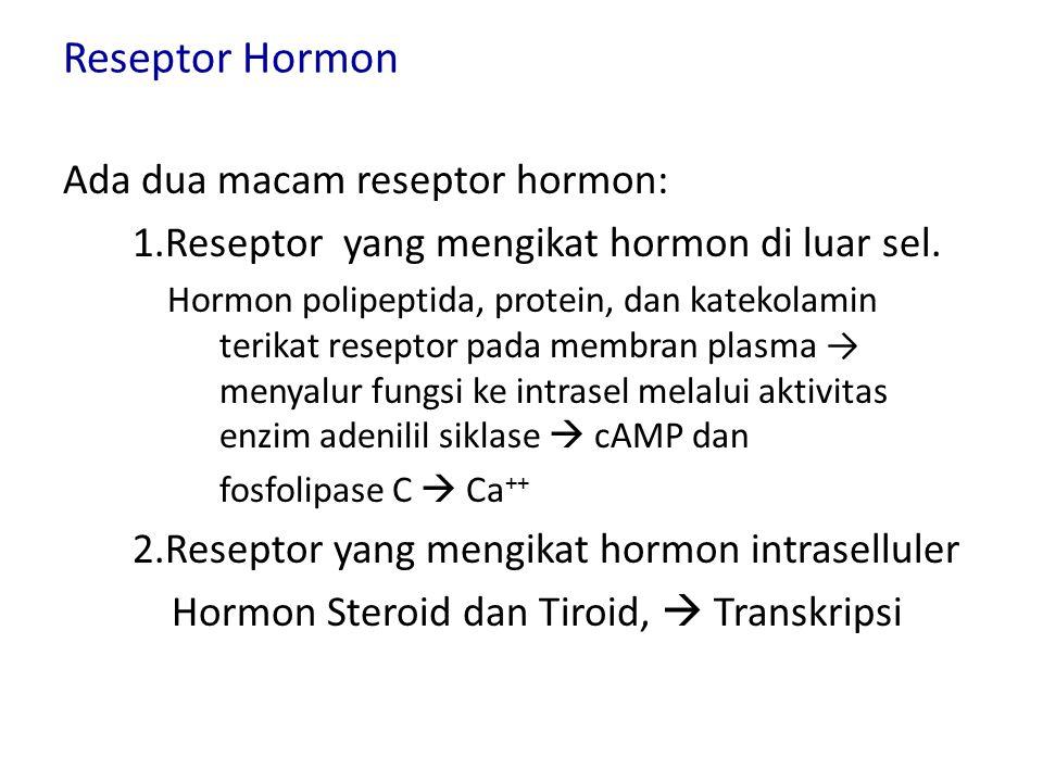 Reseptor Hormon Ada dua macam reseptor hormon: 1.Reseptor yang mengikat hormon di luar sel.