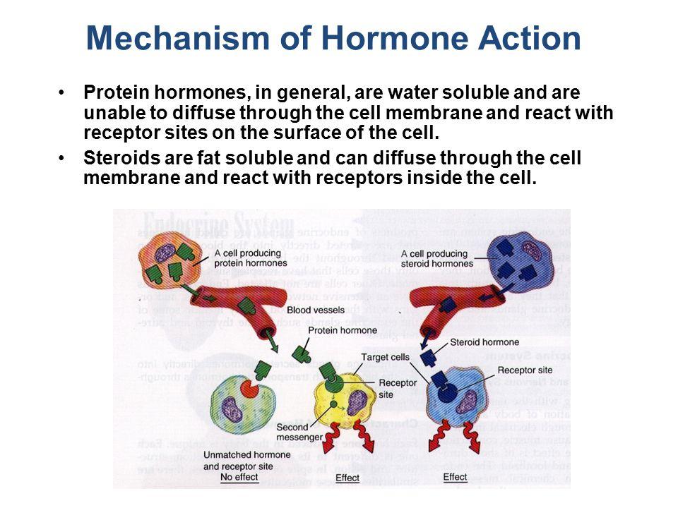 Mechanism of Hormone Action