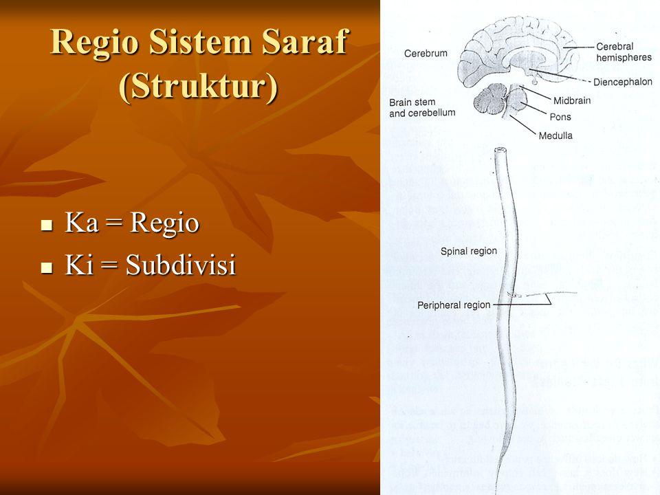 Regio Sistem Saraf (Struktur) Ka = Regio Ka = Regio Ki = Subdivisi Ki = Subdivisi
