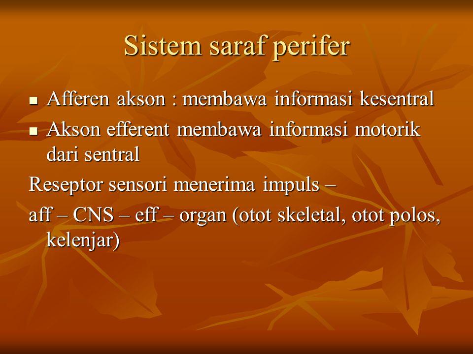Sistem saraf perifer Afferen akson : membawa informasi kesentral Afferen akson : membawa informasi kesentral Akson efferent membawa informasi motorik