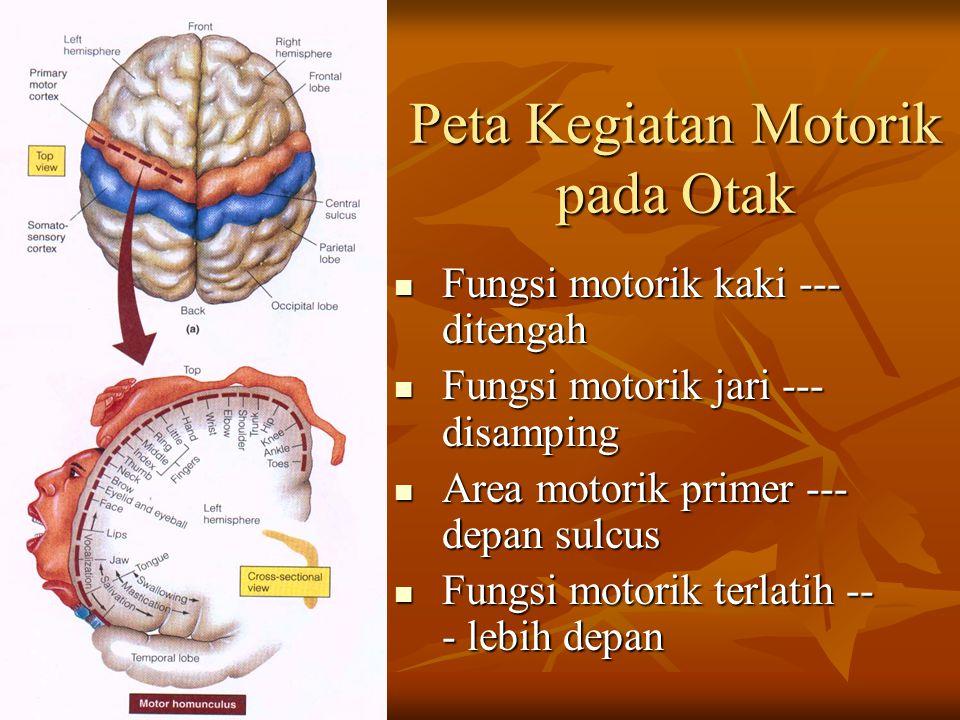 Peta Kegiatan Motorik pada Otak Fungsi motorik kaki --- ditengah Fungsi motorik kaki --- ditengah Fungsi motorik jari --- disamping Fungsi motorik jar