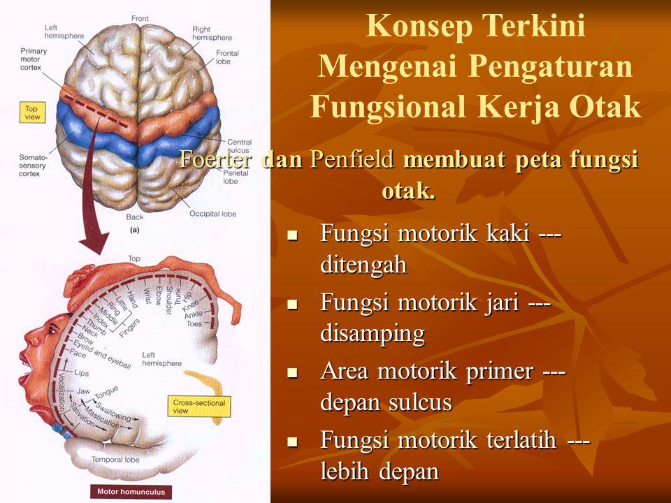 Foerter dan Penfield membuat peta fungsi otak. Fungsi motorik kaki --- ditengah Fungsi motorik kaki --- ditengah Fungsi motorik jari --- disamping Fun