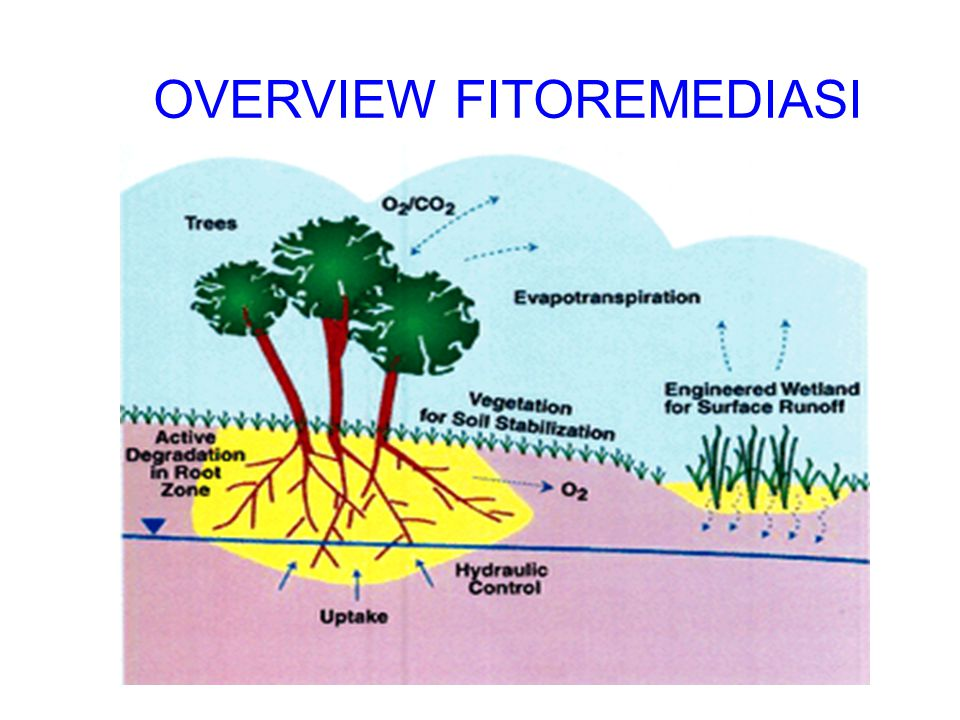 OVERVIEW FITOREMEDIASI