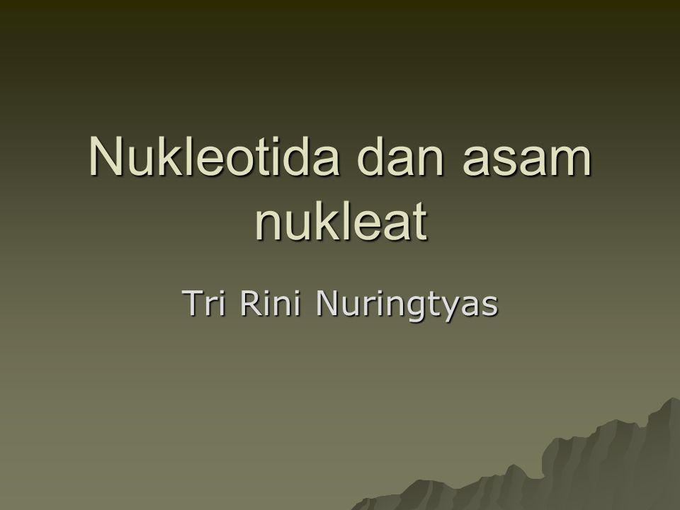 Nukleotida dan asam nukleat Tri Rini Nuringtyas