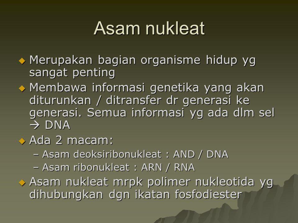 Asam nukleat  Merupakan bagian organisme hidup yg sangat penting  Membawa informasi genetika yang akan diturunkan / ditransfer dr generasi ke genera