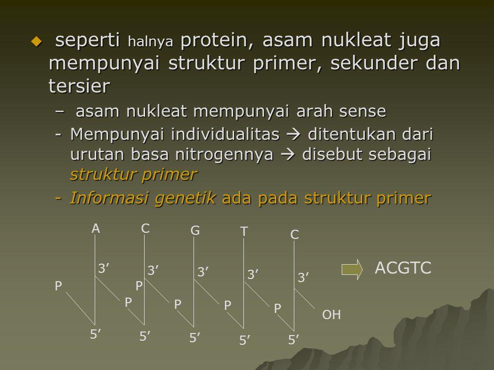  seperti halnya protein, asam nukleat juga mempunyai struktur primer, sekunder dan tersier – asam nukleat mempunyai arah sense -Mempunyai individuali