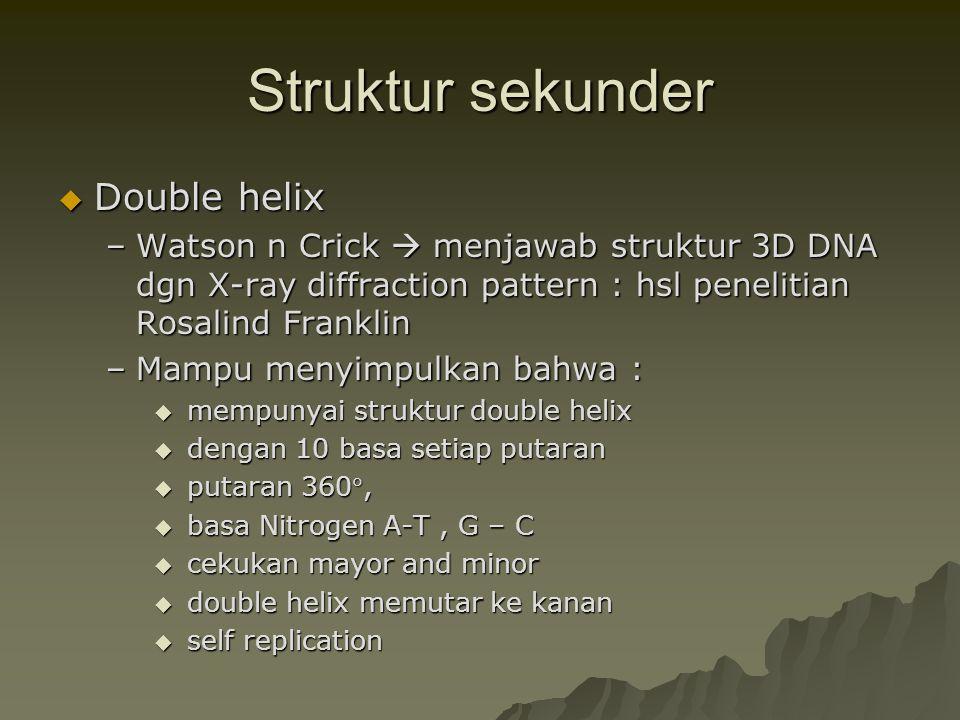 Struktur sekunder  Double helix –Watson n Crick  menjawab struktur 3D DNA dgn X-ray diffraction pattern : hsl penelitian Rosalind Franklin –Mampu me
