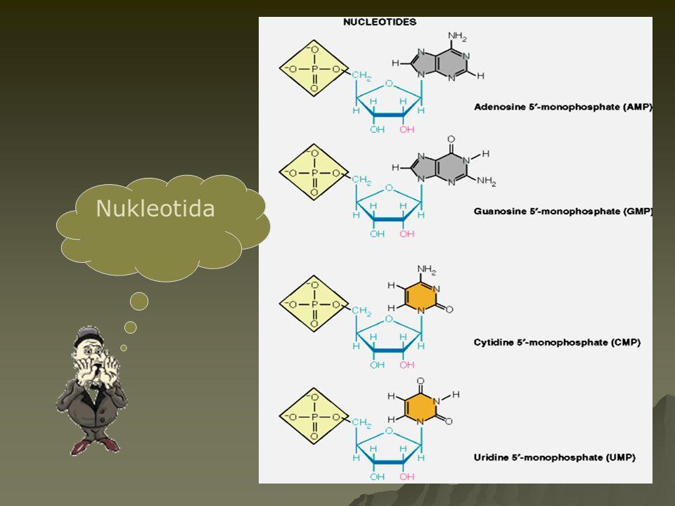Nukleotida