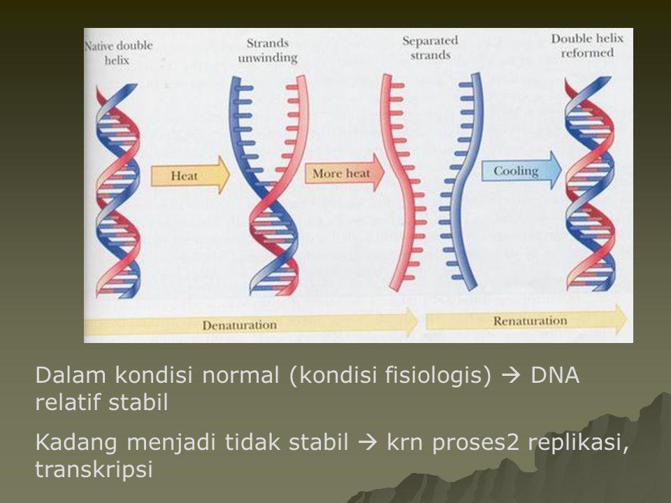  Disosiasi double helix DNA  denaturasi – apabila DNA dipanaskan diatas melting temperaturnya (Tm) maka double helix akan terbuka –Tm  tergantung pada rasio (G+C)/(A+T) –G/C content dapat dihitung dengan (G+C) / (Total Basa N) x 100%