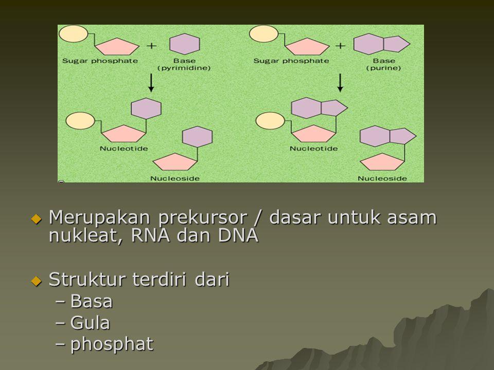  Merupakan prekursor / dasar untuk asam nukleat, RNA dan DNA  Struktur terdiri dari –Basa –Gula –phosphat