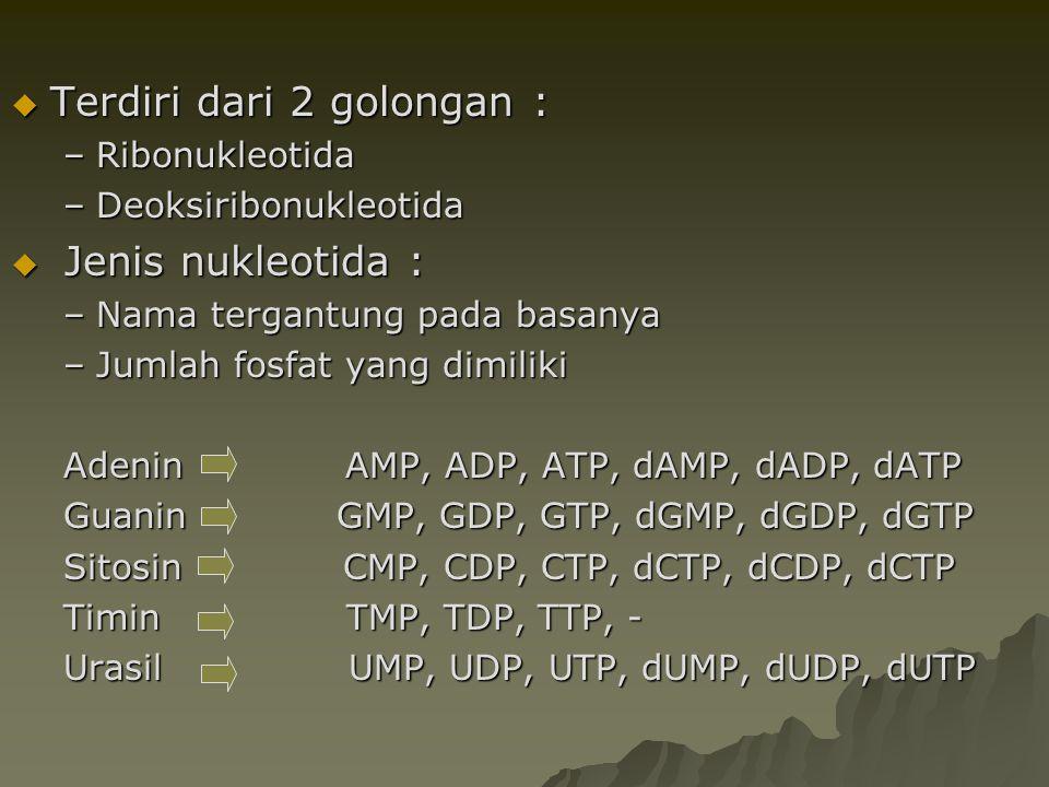  Terdiri dari 2 golongan : –Ribonukleotida –Deoksiribonukleotida  Jenis nukleotida : –Nama tergantung pada basanya –Jumlah fosfat yang dimiliki Aden