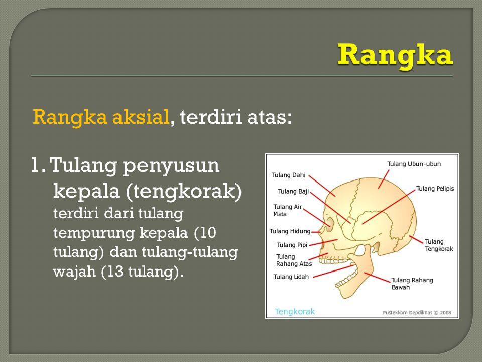 Rangka aksial, terdiri atas: 1. Tulang penyusun kepala (tengkorak) terdiri dari tulang tempurung kepala (10 tulang) dan tulang-tulang wajah (13 tulang