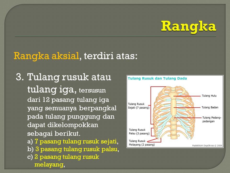 Rangka aksial, terdiri atas: 3. Tulang rusuk atau tulang iga, tersusun dari 12 pasang tulang iga yang semuanya berpangkal pada tulang punggung dan dap