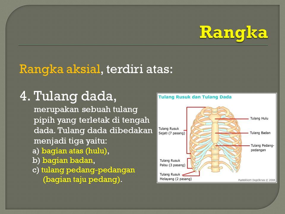 Rangka aksial, terdiri atas: 4.Tulang dada, merupakan sebuah tulang pipih yang terletak di tengah dada. Tulang dada dibedakan menjadi tiga yaitu: a) b