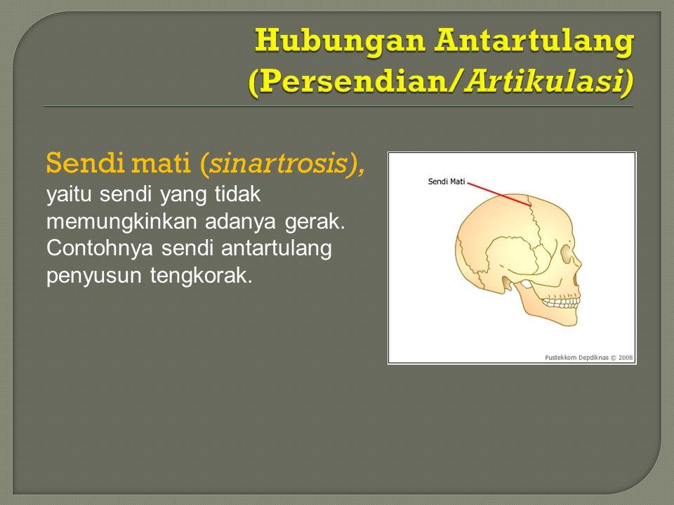 Sendi mati (sinartrosis), yaitu sendi yang tidak memungkinkan adanya gerak. Contohnya sendi antartulang penyusun tengkorak.